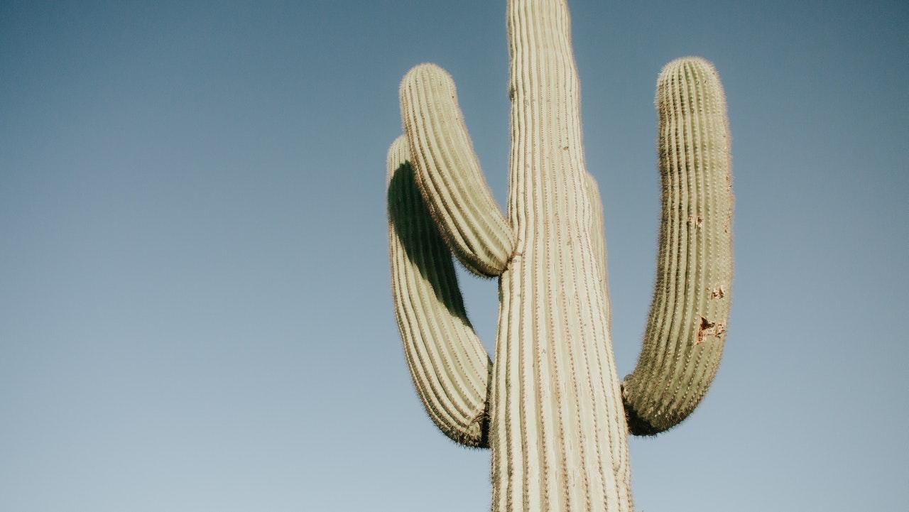 low-angle-photo-of-cactus-2749602